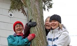 Soili Mäenpää, Marja Silfverberg-Havanka ja Katriina Mikola saavat kunnalta rauhoituskyltin, joka pitää pystyttää pilarikatajan juureen.