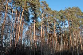 Asutuksen lähellä metsäsuunnitelmasta voidaan tehdä myös puistomainen.