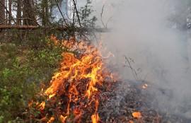 Aluskasvillisuus syttyi palamaan rutikuivassa metsässä. Kuva: Simo Päivärinta