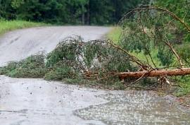 Kaatunut puu haittasi liikennettä Tiskarlantiellä. Kuva: Simo Päivärinta