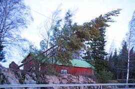 Tapaninpäivän myrsky runteli Auranmaata vuonna 2011. Tuolloin puita kaatui monin paikoin myös sähkölinjojen päälle. Kuva on Auran nuortentalon läheltä. Kuva: Simo Päivärinta