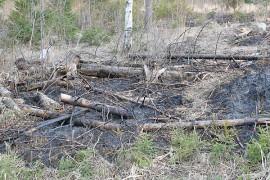Palokunta sammutti maastopalon hakkuuaukean reunaan. Kuva: Jorma Kaarto.