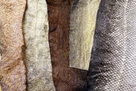 Parkkiintuneen nahan voi säilyttää kuivaamalla tai pakastamalla. Kuvassa hauen, mateen, kirjolohen ja norjanlohen parkitut nahat.