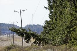 Puu kaatui sähkölinjoille Marttilassa Hämeentiellä lähellä Salo–Aura-tien risteystä kello 14.15 aikoihin. Kuva: Simo Päivärinta.