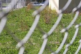 Nurmikko rehottaa villinä ja vapaana TeliaSoneran tontilla Yläneen keskustassa.