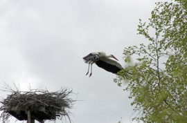 Suru saapui kattohaikaraperheeseen, kun perheen kuopus kuoli.