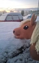 Pakkanen ei tätä hevosta hirvitä. Kuva: Roosa Korpiaho