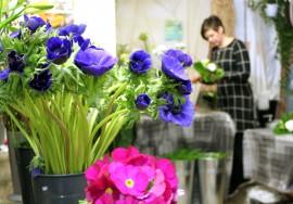 Tilauskukkasitomo KukkaUnelman Taina Ali-Raatikainen käynnisti helmikuun alussa asiakkaan ehdotuksesta viikkokukkaringin, joka tuo kimpun kotiovelle joka toinen viikko.