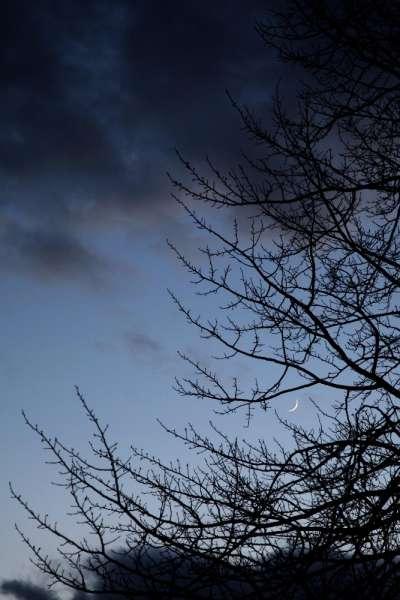 Kevään merkki on iltataivaalla näkyvä kasvava kuunsirppi ja haavan silmut.  Kuva Koskelta Liipolan kylästä 9.4.2016. Kuvaaja: Miika Mikkola.