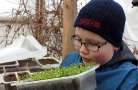 Aaron Rönnemaa odottaa jo satokautta. Innokaan nuoren viljelijän mielestä viljelypuuhissa hauskinta on sadon kypsyminen. Kylvöistä vasta lehtikaali vihertää.
