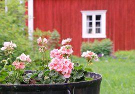 Yläneen kotiseutumuseo ja sen tunnelmallinen pihapiiri kutsuvat taas näyttelyvieraita. Kuva: Elisa Niittymaa.