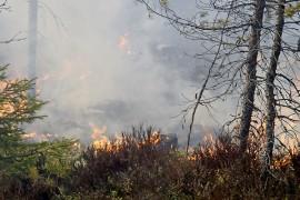 Maastoa paloi vajaan hehtaarin alueelta.