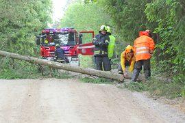 Tarvasjoen VPK kävi kaatamassa tuulenpuuskien riepotteleman puun ennen kuin vahinkoja ennätti tapahtua. Kuva: Pentti Mäkitalo.